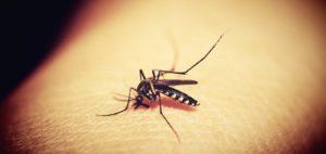 Mosquitron como funciona? Mosquito trap, Caracteristicas