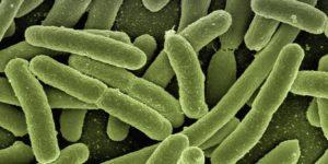 Parasiter i mag-tarmkanalen-lobat maskar